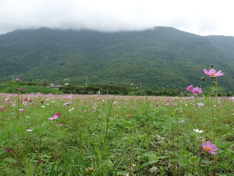 TAIWAN . Hualien et au Sud de Hualien,presque jusqu à Taitung - P1160768.JPG