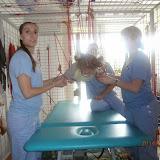 terapia ragno estate 2014
