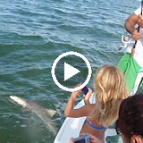 Arnolds Bullshark.avi