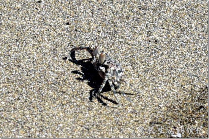 台南安平-漁光島。沙灘上偶而還可以看到小螃蟹。