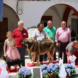 II Concurso Nacional Canino