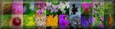 ある春の日の草花
