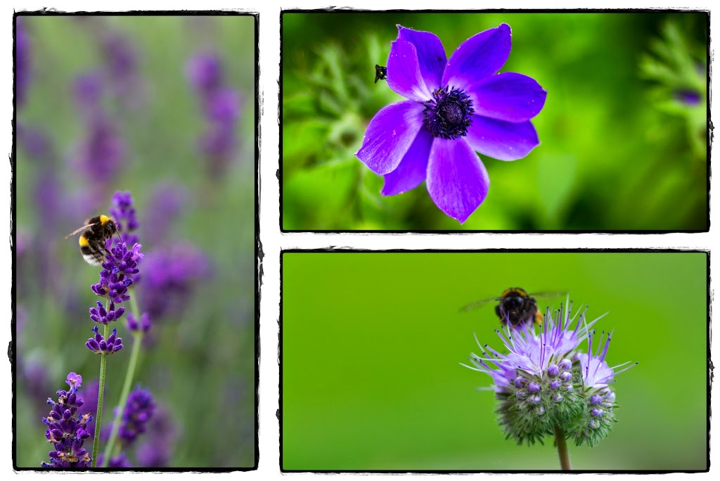 2014-07_Jardin_page