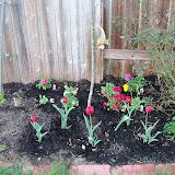 Gardening 2011 - 100_6748.JPG