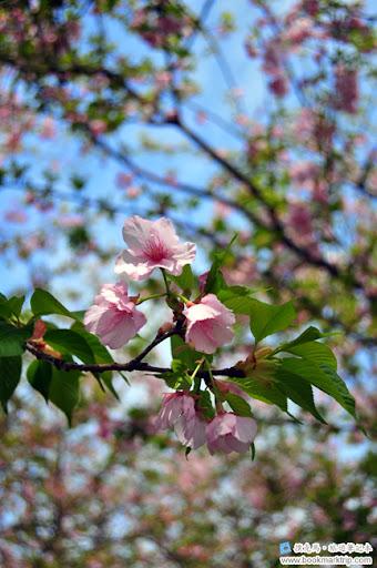 芬園花卉生產休憩園區紫梅
