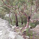 Lapstone Lookout (146625)