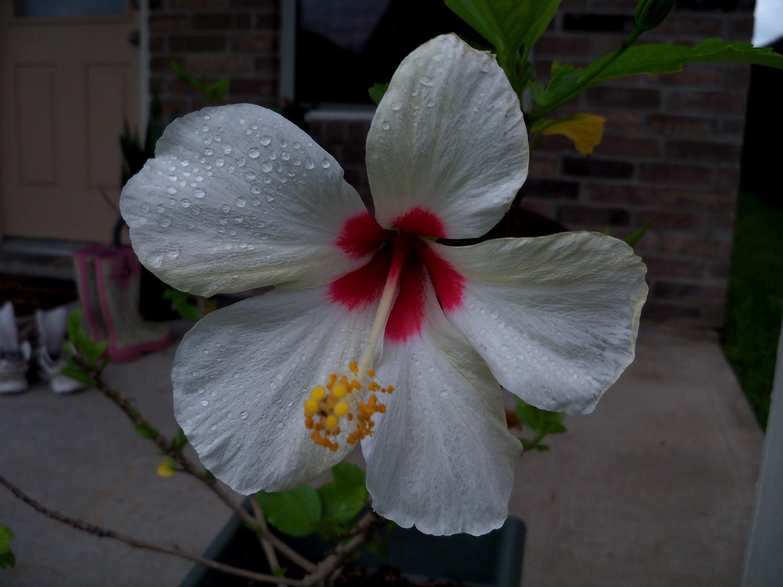 Gardening 2012 - 115_1436.JPG