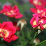 Gardening 2012 - IMG_2730.JPG