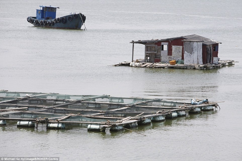 aquaculture-farm-china-8
