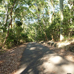 Sealed trail with forest either side in the Blackbutt Reserve (399412)