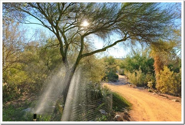 151230_Tucson_Tohono-Chul-Park_0016