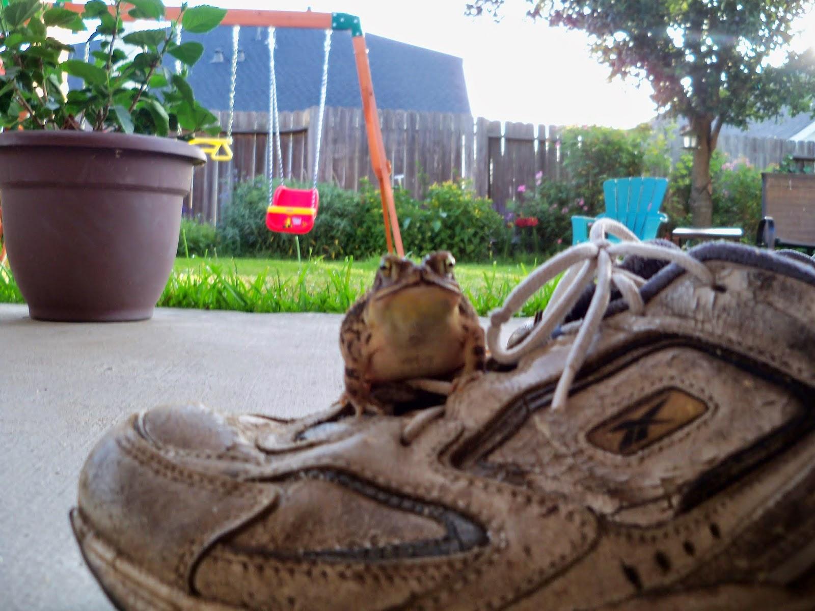 Gardening 2014 - 116_3019.JPG