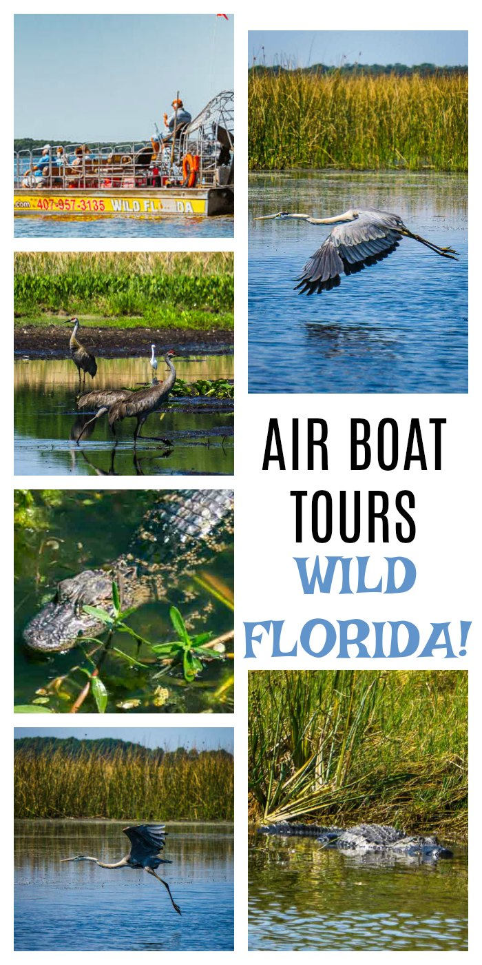 Wild Florida Air Boat Tours. Incredible air boat tour near Orlando, Florida. Bird watchers, alligator spotters and families are left in awe! Florida Travel | Florida Wildlife | Air Boat Tours