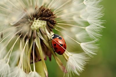 Insectos que eliminan plagas