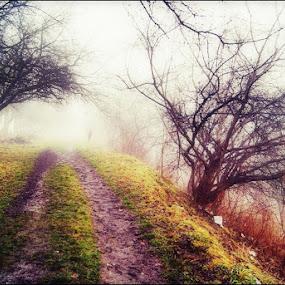 Foggy by Marta Bednarska - City,  Street & Park  City Parks ( fog landscapes city parks )