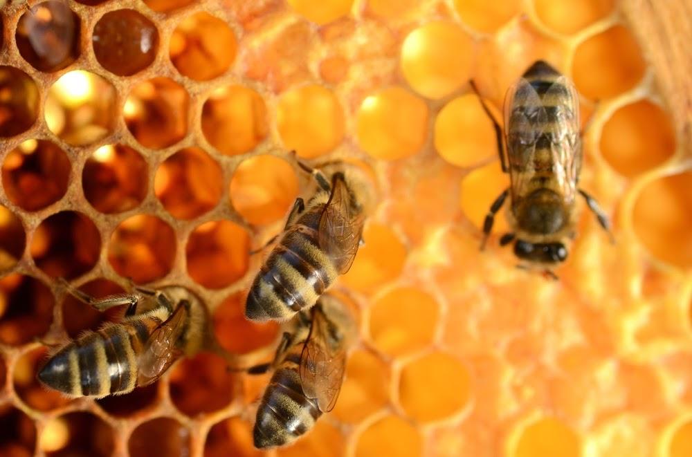 Bayer loses EU case over chemicals blamed for killing honeybees