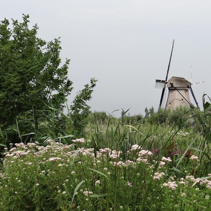 Day_6_Kinderdijk_45.JPG