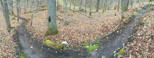 Mountain bike singletrack on Twin Lakes loop cleared over the weekend.
