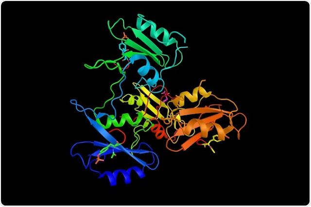 Organogenesis in detail