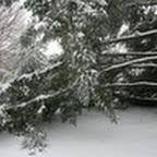 tn_lachaux-2010-12-09.jpg