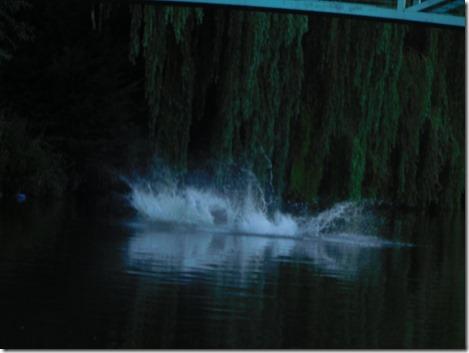 34 splash