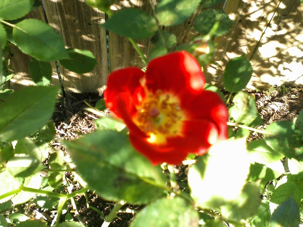 Gardening 2014 - 0409175505.jpg
