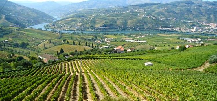 Douro vive ano atribulado na vinha devido a mau tempo