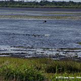 04-06-12 Myaka River State Park - IMGP4451.JPG