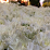 passiflora fiori e piante's profile photo