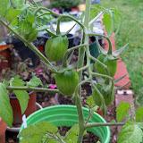 Gardening 2010 - 101_1209.JPG