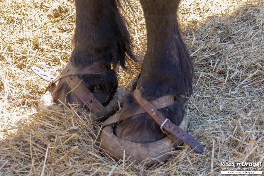 Koń w butach - na Czarnym Weselu w Klukach