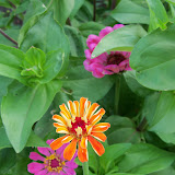 Gardening 2011 - 100_8231.JPG
