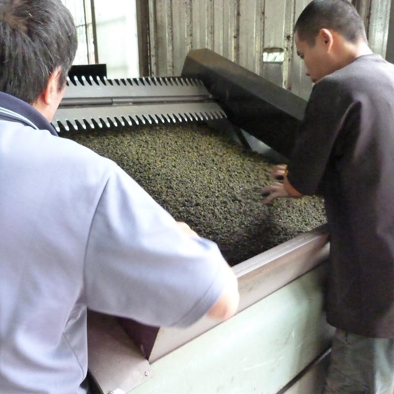 Séchage du thé, ici environ 200 kilos