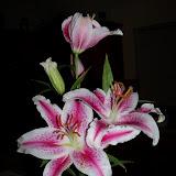 Bouquets - 101_0219.JPG