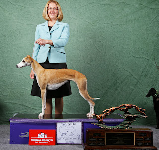 ELSA (FC Cali's Red Clay Halo SC FCh) #1 Whippet/Sighthound 2014 AKC Lure Coursing