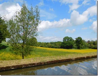 8 buttercups at rowington