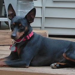 Nancy Crane's Family Pet Care's profile photo