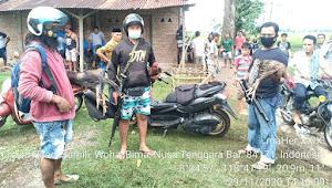 """Tim Puma Polres Bima Gerebek Judi  Sabung Ayam  di Dua Lokasi Berbeda """""""