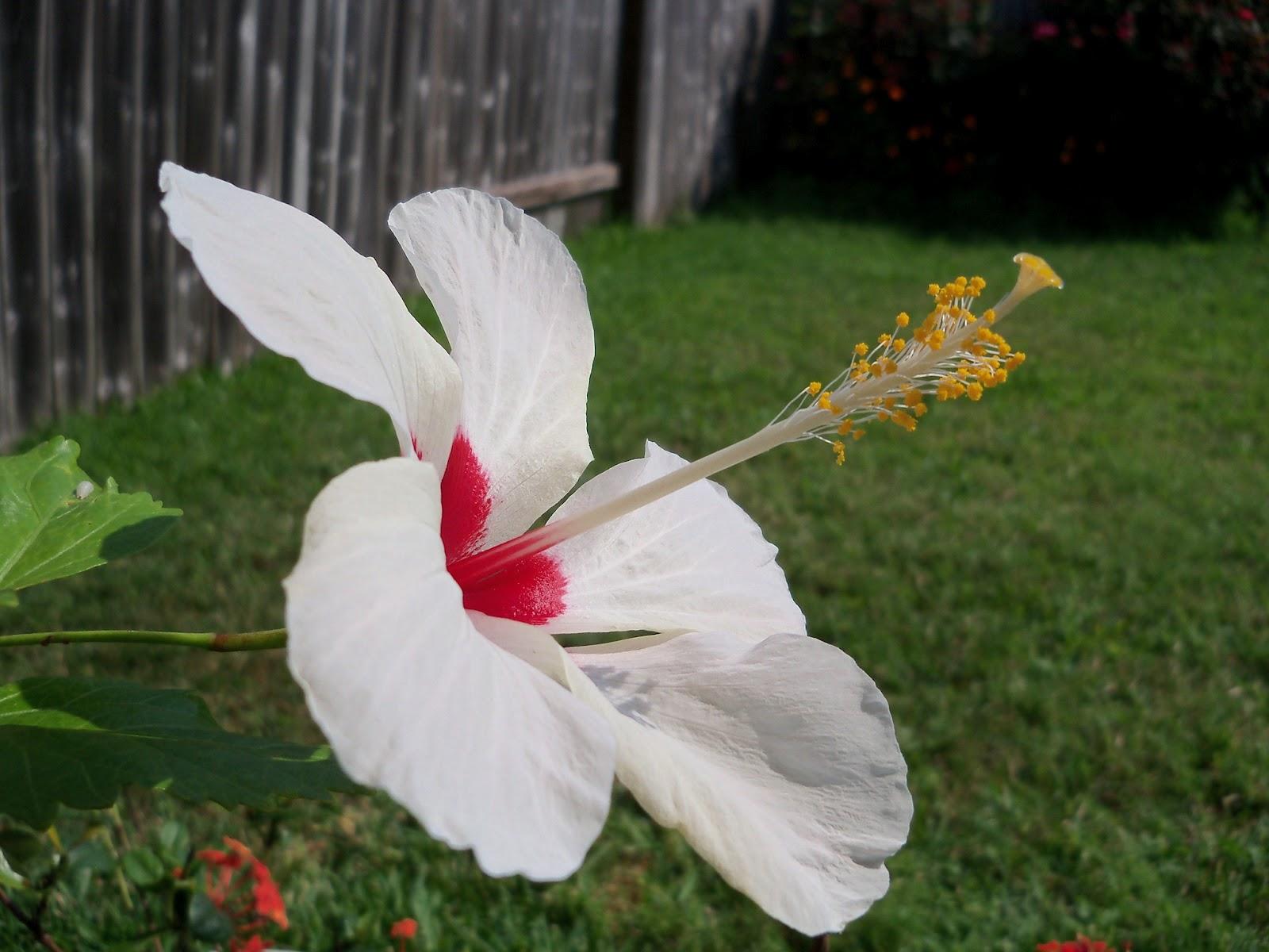 Gardening 2012 - 115_1911.JPG