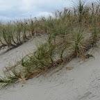 Neuseeland - Strand und Dünen