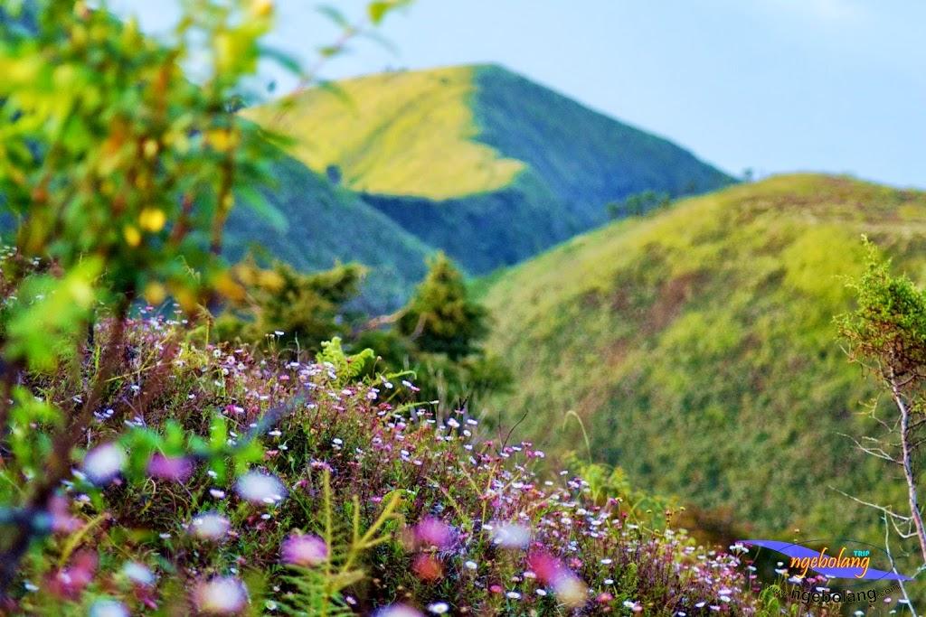 ngebolang gunung prau 13-15-juni-2014 nik 2 002