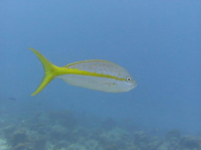 Bonaire 2011 - PICT0058.JPG