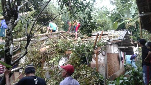 Cuaca ekstrim, setidaknya 3 Pohon tumbang menimpa rumah warga di Kecamatan Kalapanunggal / Foto : Istimewa