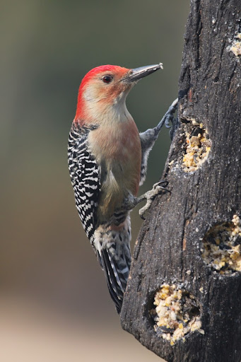IMG_2372woodpecker-2014-10-24-12-56.jpg