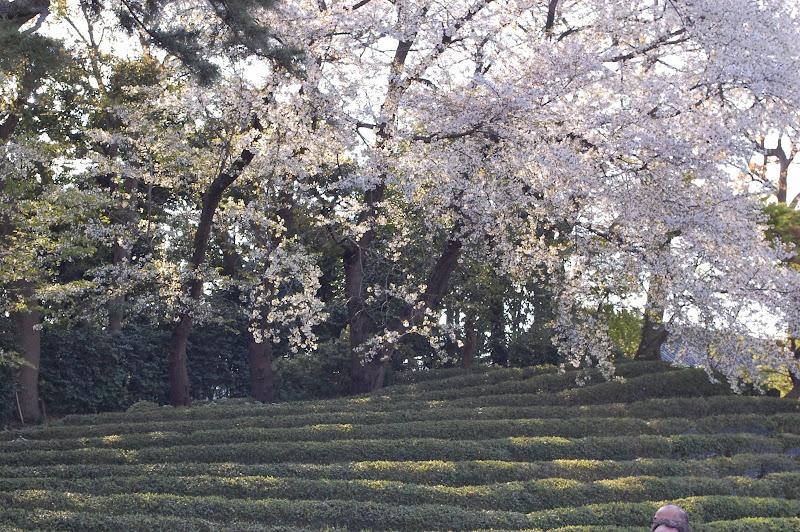 2014 Japan - Dag 11 - jordi-DSC_1012.JPG