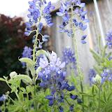 Gardening 2012 - IMG_2705.JPG