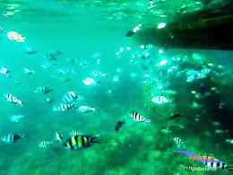 explore-pulau-pramuka-olp-15-16-06-2013-24