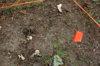 Photo: Both bone and 'evidence' is left in place and photographed and mapped before anything is ever picked up.  A clear application of basic archaeological field techniques.