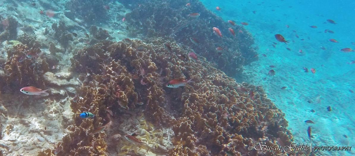 Bonaire GOPR0564 1
