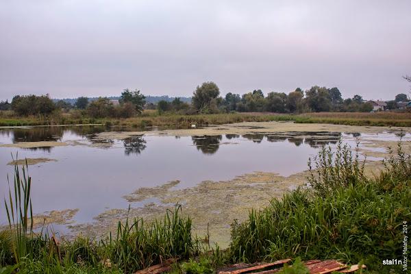 ставок в селі Волошки
